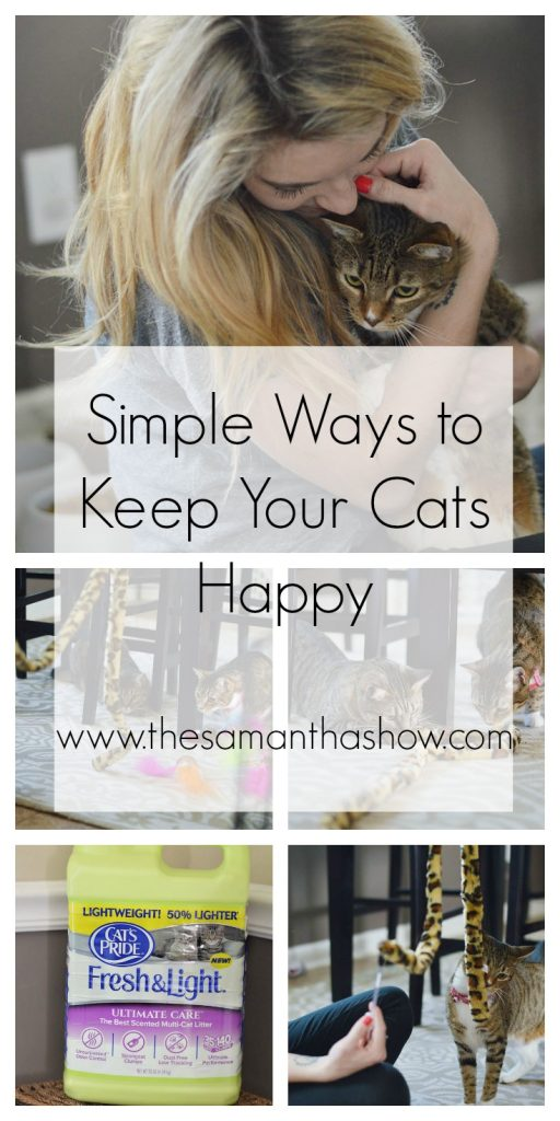 simplewaystokeepyourcatshappy