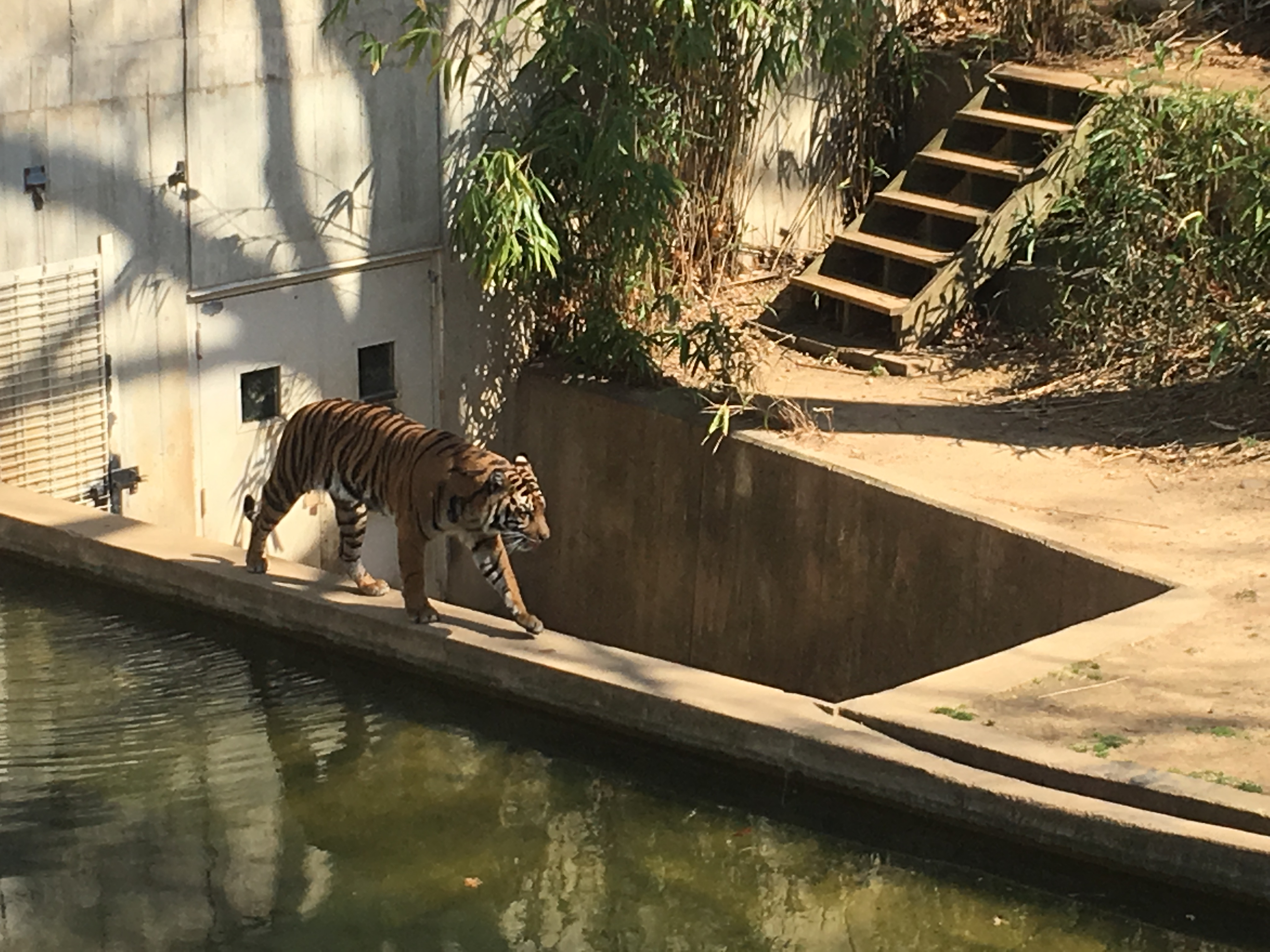 Staycation in Washington, D.C. - Smithsonian's National Zoo