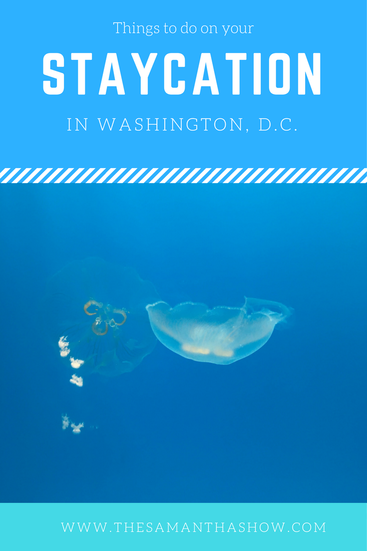 Staycation in Washington, D.C.